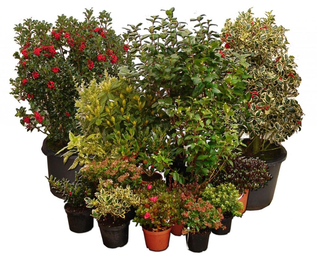 Arbustos el torruco for Arbustos con flores