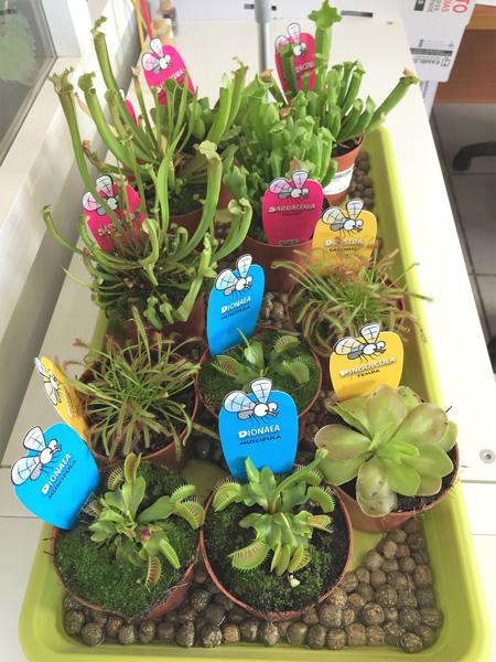 planta carnivora, carnivora, plantas, jardineria, vivero, el torruco, villanueva de la serena, don benito, badajoz, extremadura
