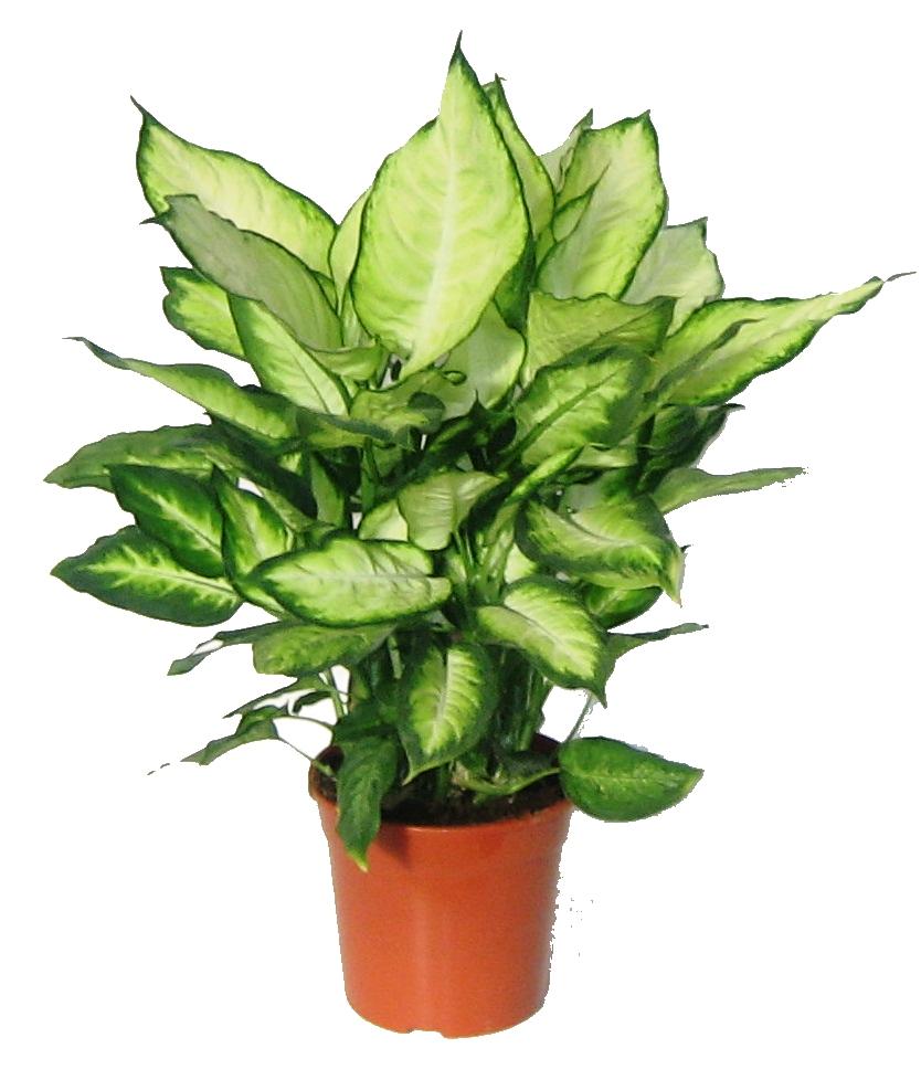 plantas verdes el torruco