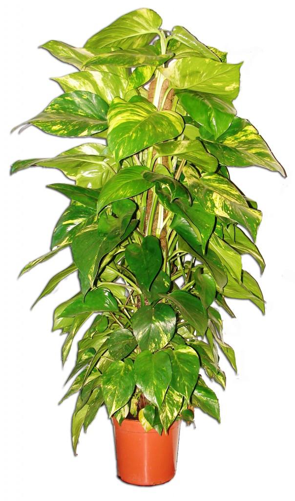 Plantas verdes el torruco - Plantas verdes exterior ...