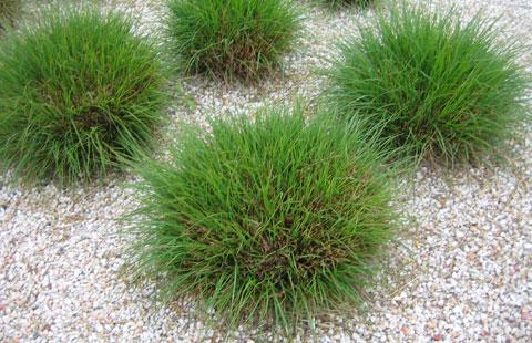 Vivaces y perennes el torruco - Plantas perennes exterior ...