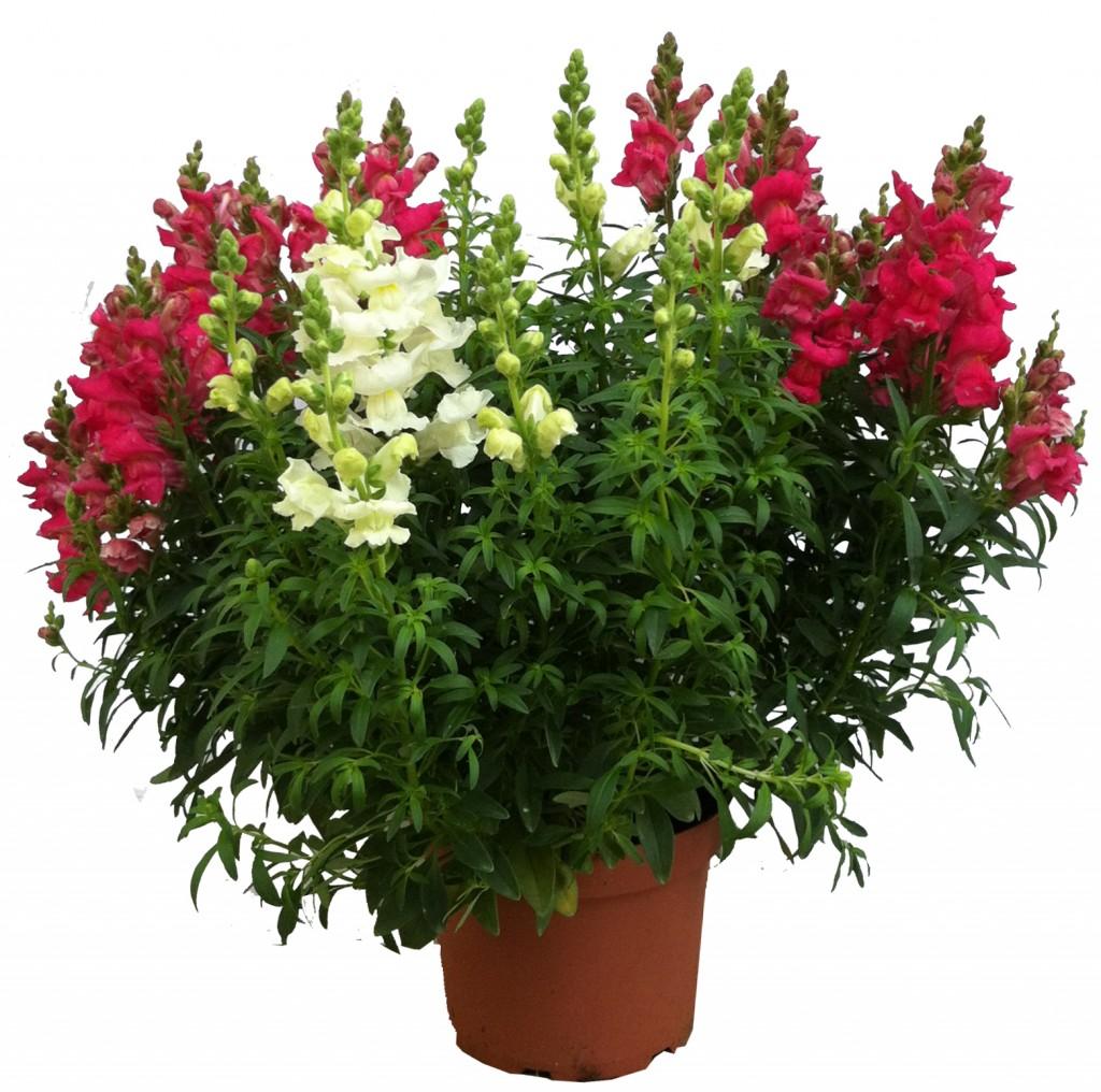 Plantas de temporada el torruco - Plantas de temporada primavera ...