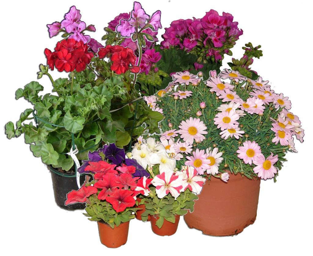 Plantas de temporada el torruco for Plantas temporada