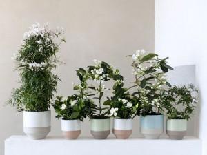 Flores blancas OHF, aroma de jazmines, el torruco, verde es vida, centro de jardineria, aroma jazmin, villanueva de la serena