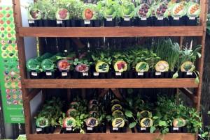 fitoralia, plantel horticola ecologico, huerto urbano, el torruco, centro de jardineria, villanueva de la serena