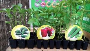 fitoralia, plantel horticola, ecologico, huerto urbano, el torruco, centro de jardineria, el torruco, villanueva de la serena