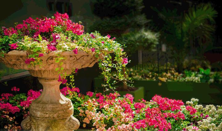 centro de jardineria, el torruco, jardin, vivero, plantas, paisajismo, villanueva de la serena, don benito, badajoz