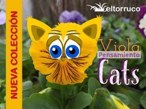 viola wittrockiana, pensamientos, cats, flor, invierno, temporada, centro de jardineria, el torruco, viveros, plantas, jardines, villanueva de la serena, don benito, badajoz