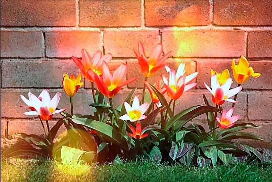 plantas, jardineria, vivero, el torruco, villanueva de la serena, don benito, badajoz, extremadura
