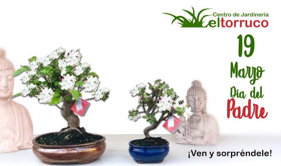 dia padre, padre, bonsai, regalo, el torruco, centro jardineria, jardinero, plantas paisajismo, vivero, el torruco, villanueva serena, don benito, badajoz, extremadura